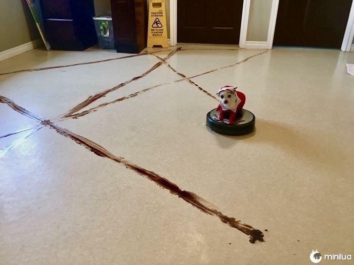 A creche local do cachorrinho aprendeu uma lição valiosa sobre deixar um Roomba na área da recepção