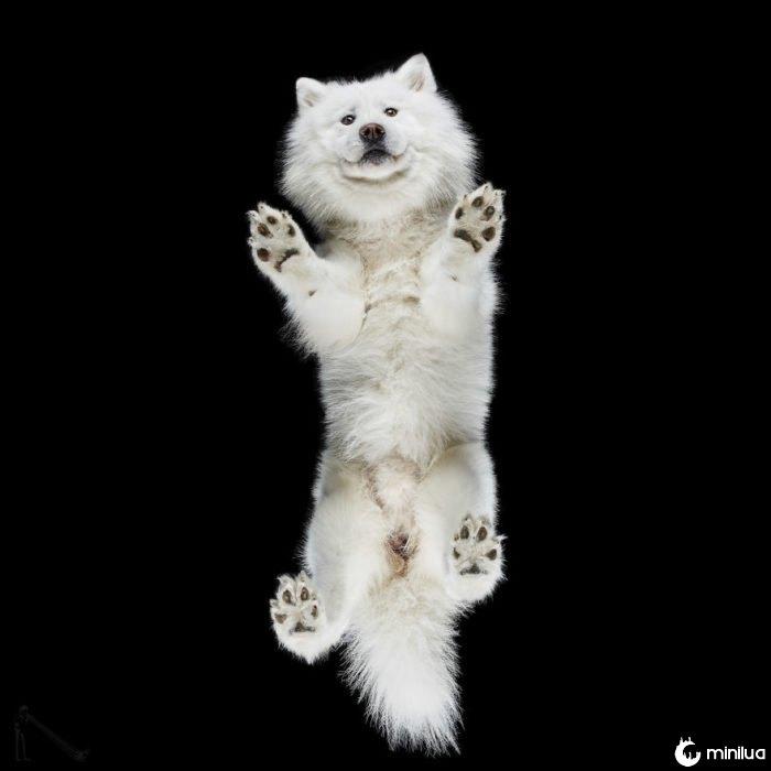 cão branco visto abaixo