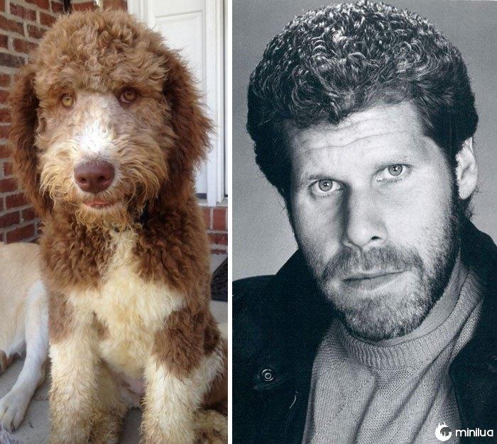 Este cão olha como Ron Perlman