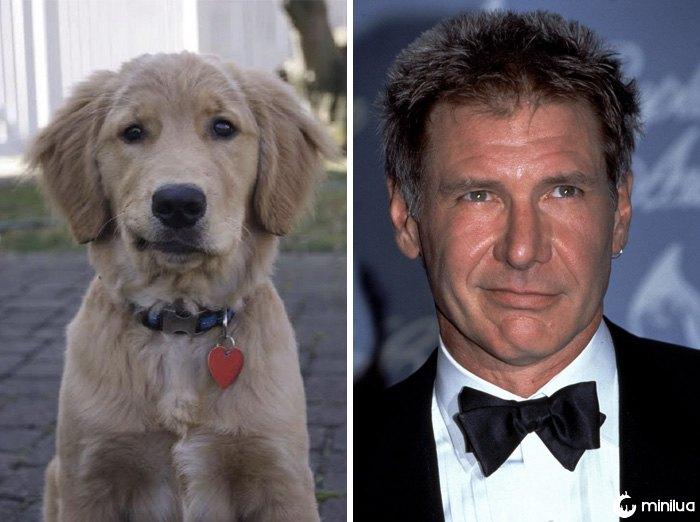 Este cão olha como Harrison Ford