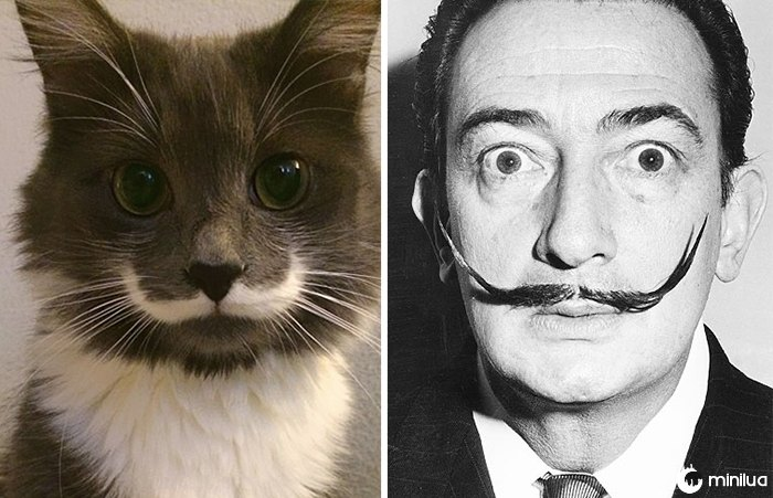 Hamilton O gato do hipster olha como Salvador Dali