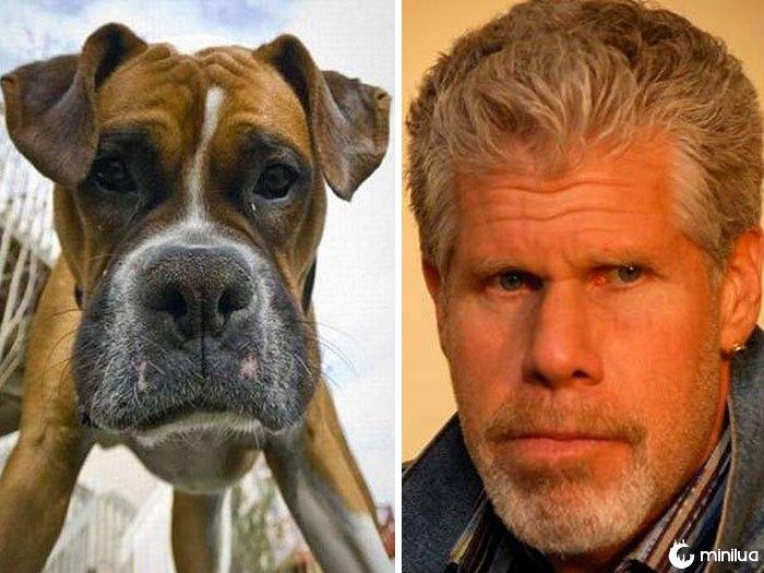 O cão olha como Ron Perlman