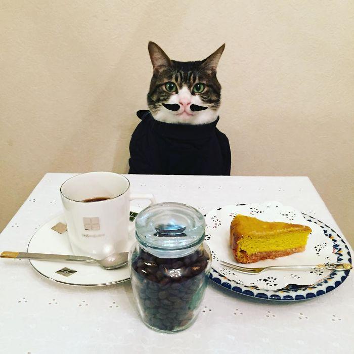 Cosplay do gato