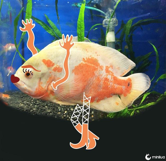 My Sassy Goldfish