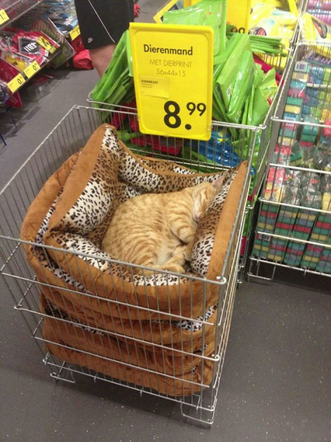 Just A Chilling Cat Giving Zero F*cks In A Local Store