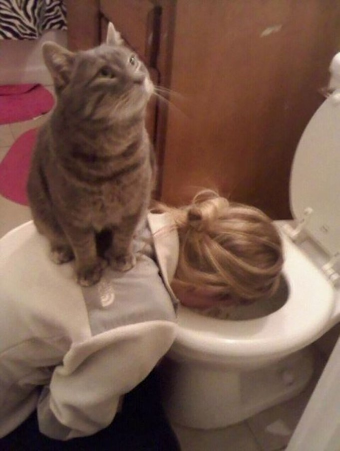 Kitty não se importa com seus problemas