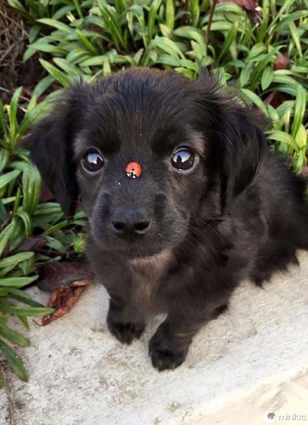 Um joaninha Boopin O Snoot do Pupper