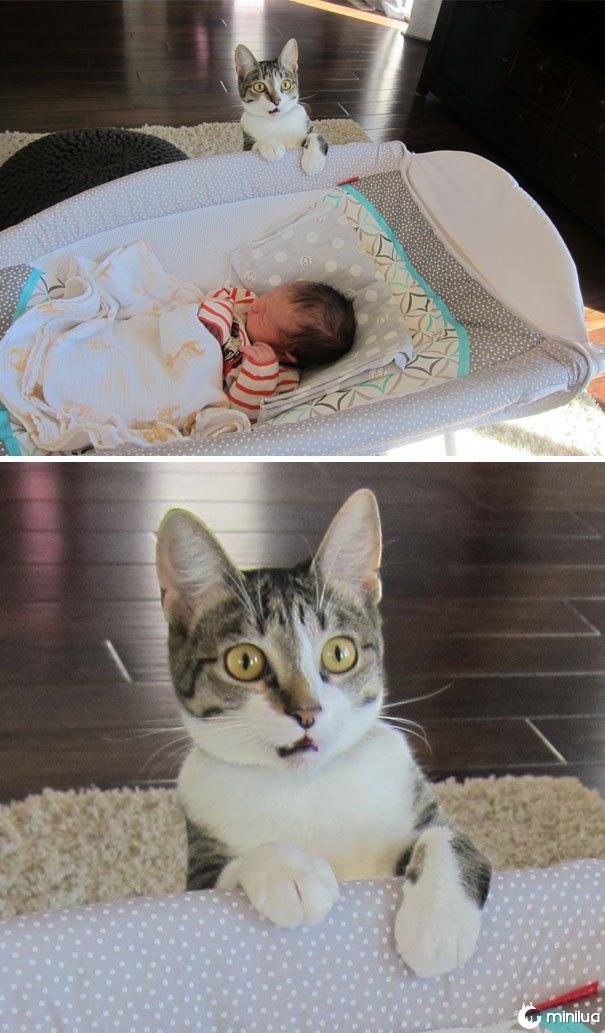 Nós esquecemos de dizer a nosso gato que nós tivemos um bebê