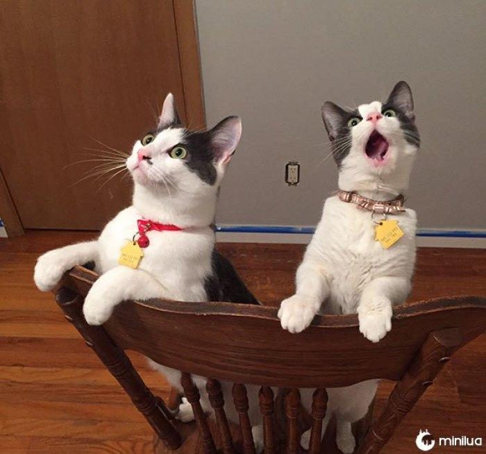 A reação de meus gatos a ver o movimento do ventilador do teto pela primeira vez