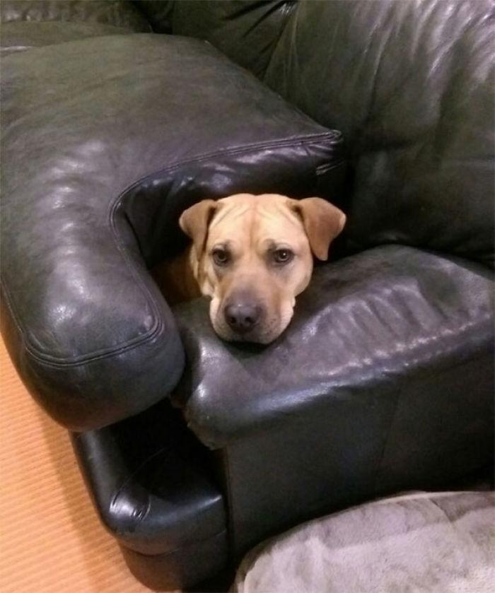 não vamos entrar no sofá