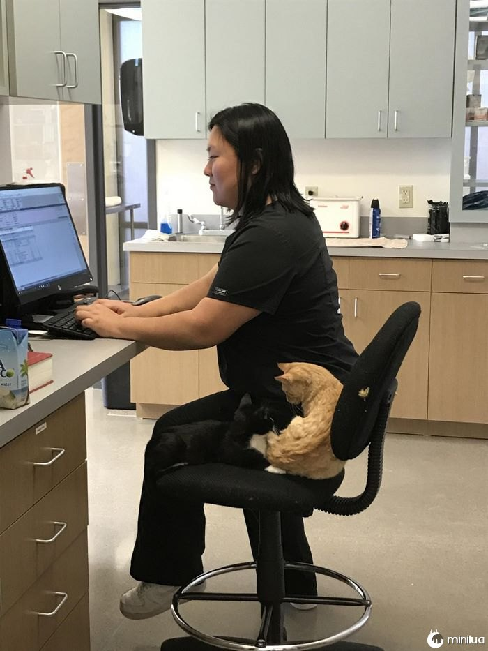 Veterinário-office-cat-calms-patients-ron-4