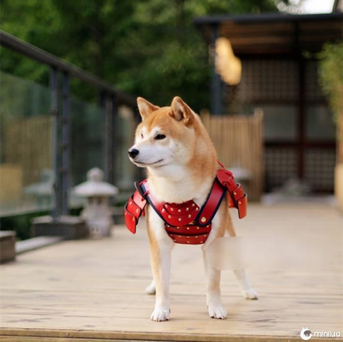 Pet-dog-cat-armor-samurai-age-japan-11