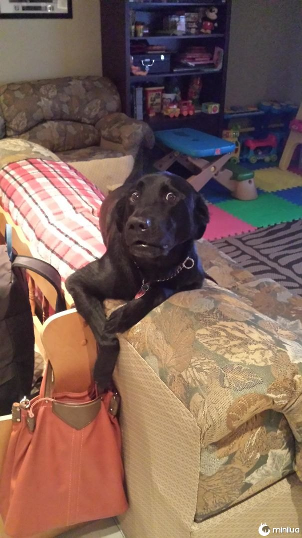 Pegou-o tentando colecionar minha bolsa de mães