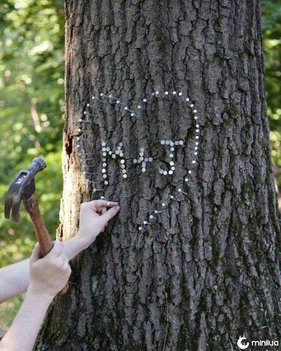 Não martelo em uma árvore