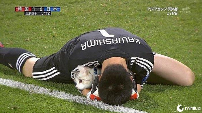 Photoshop gatos futbol