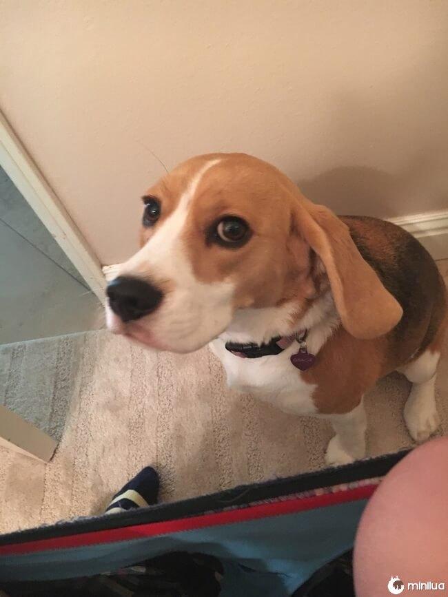 cachorro_banheiro1