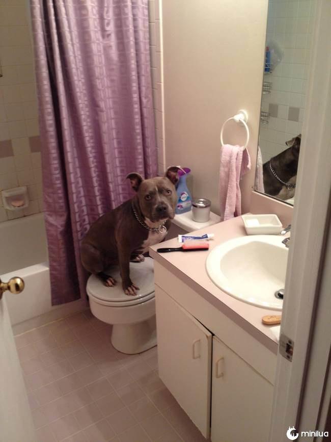 cachorro_banheiro10