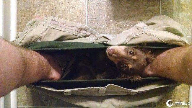 cachorro_banheiro6