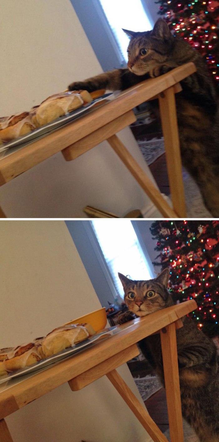 Cat Busted tentando tocar os rolos de canela