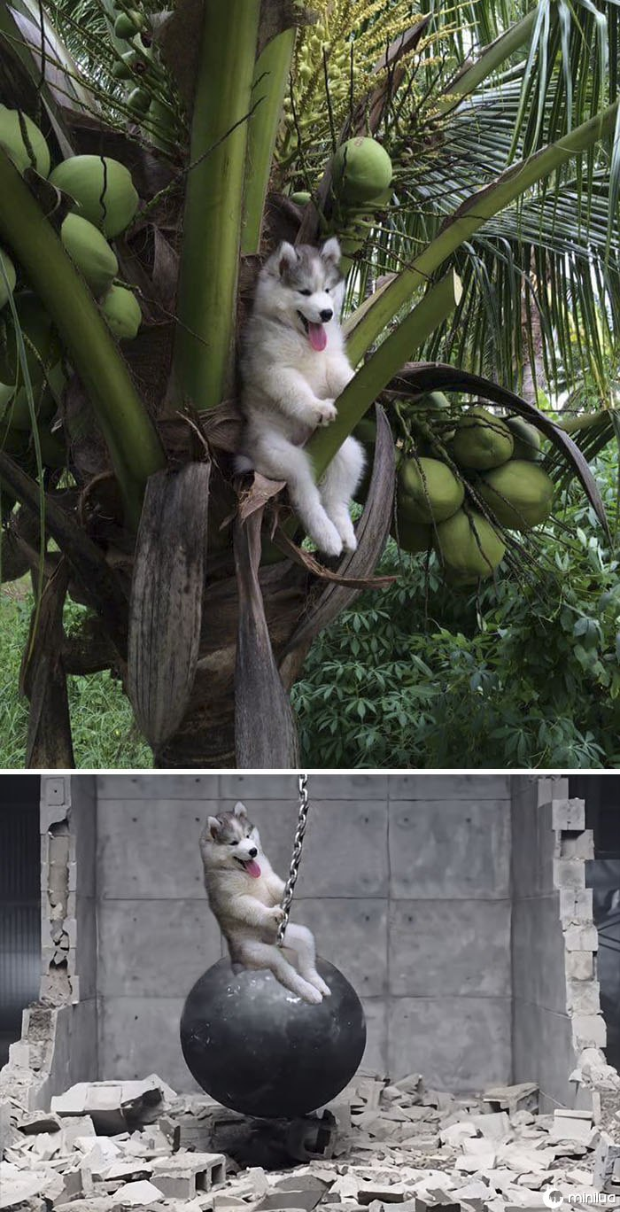 A Dog In A Tree