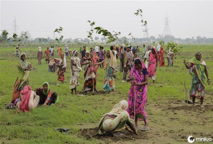 Plantan 66 millones de árboles en India