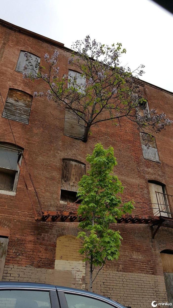 Uma árvore cresce a partir da janela do terceiro andar
