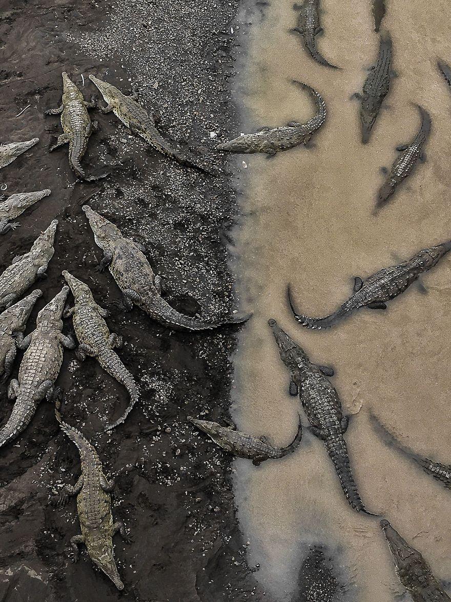 Vencedor do terceiro lugar, Natureza: Crocodilos em Rio Tarcoles, Costa Rica
