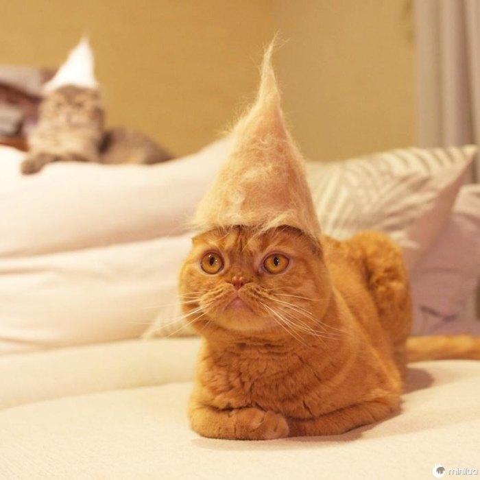 Gatos nos chapéus feito do seu próprio cabelo