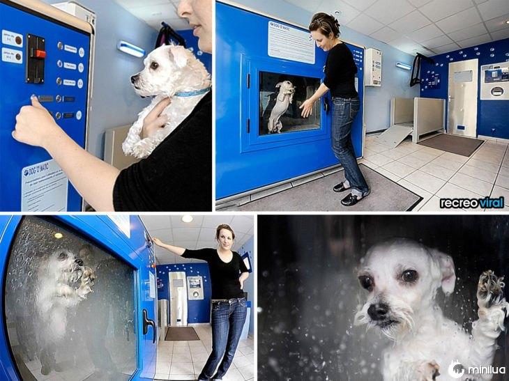 produtos do cão - máquina de cachorro para tomar banho