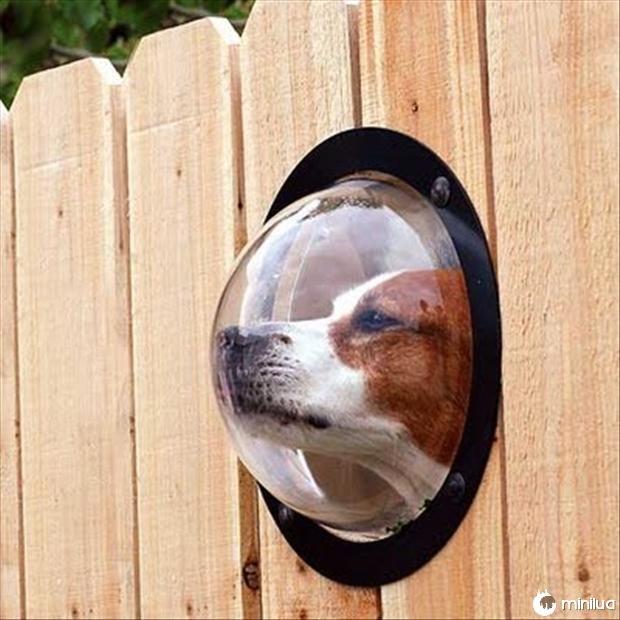produtos do cão - buraco cão em cima do muro
