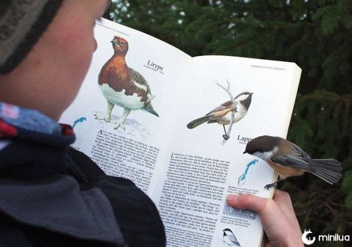 Este pássaro aterrissou na página sobre si mesmo