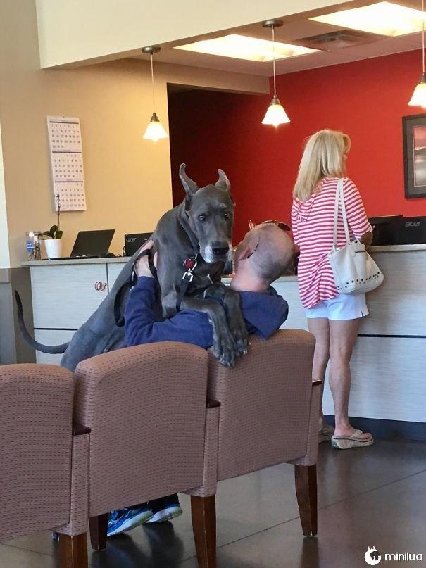 Scared Boye esperando para ver o veterinário