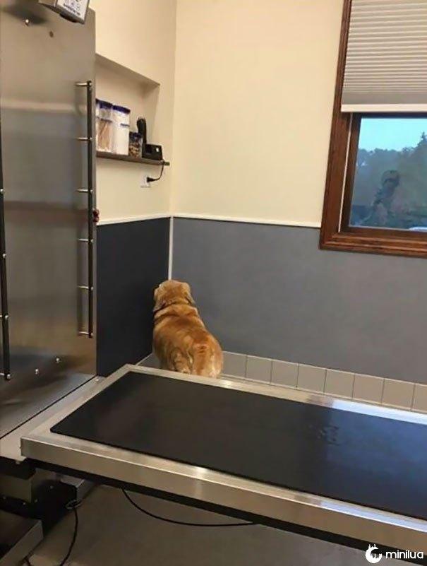 A estratégia de Jack no veterinário: se eu não posso ver você, você não pode me ver