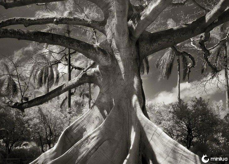 árvore vista de baixo