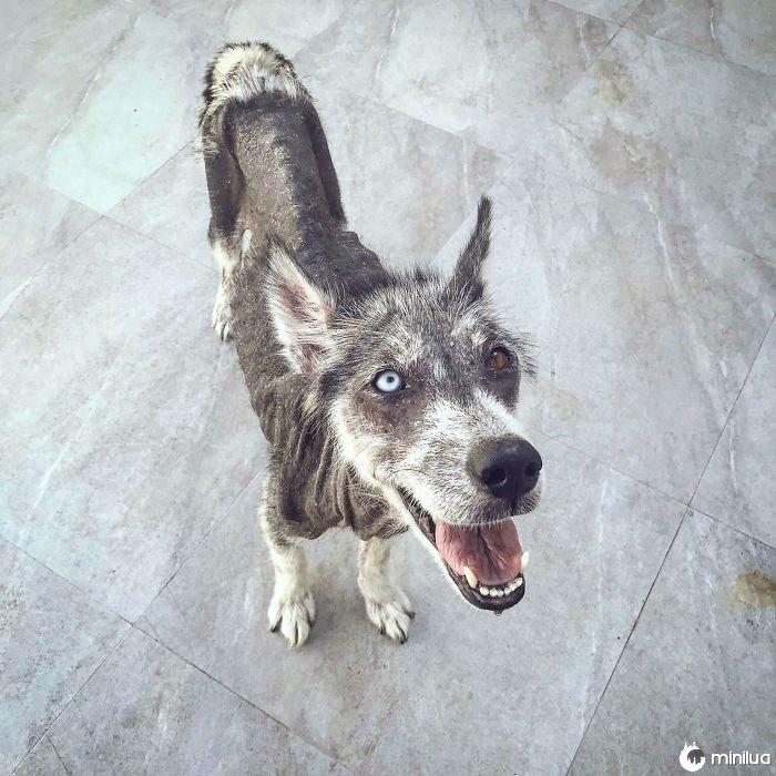 Filhote de cachorro da rua que foi transformada
