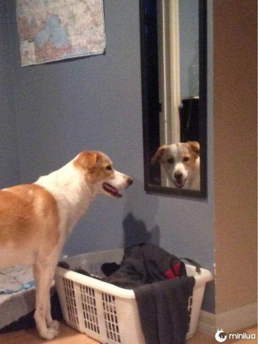 cão espelho