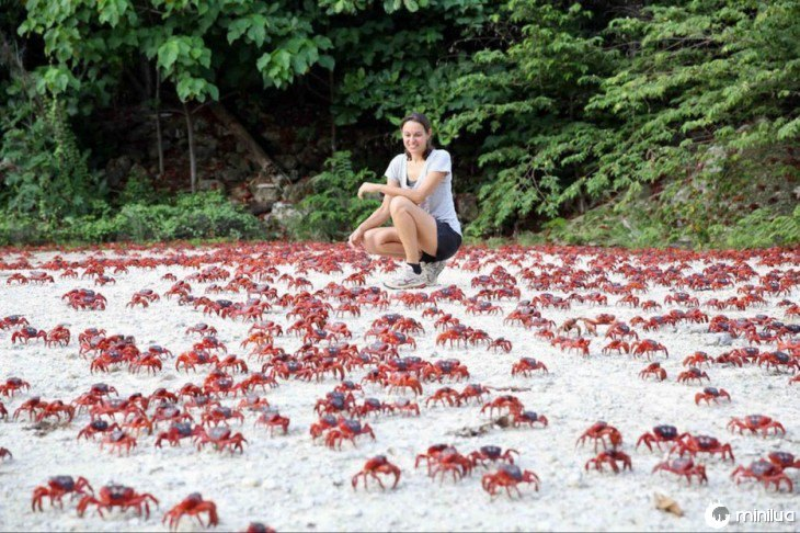 caranguejos vermelhos