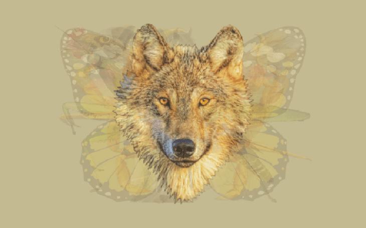 Lobo de Quéanimalves