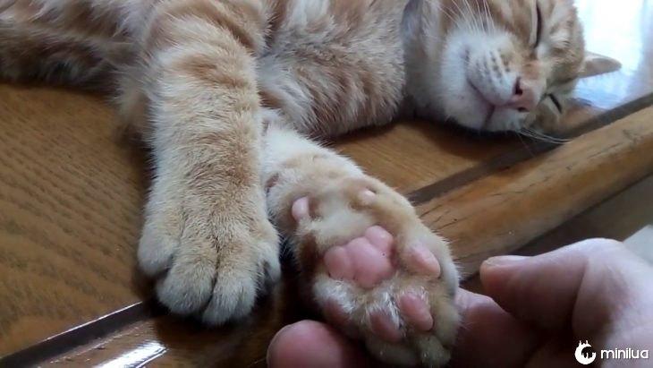pernas de gato