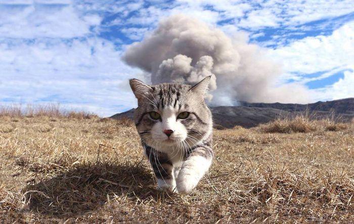 Fotogênico-Cat-Noraneko-Nyankichi-Japão