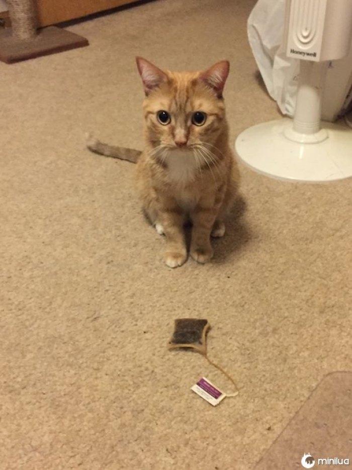 Alguns gatos trazem seus seres humanos Pássaros e ratos. Oliver me traz saquinhos de chá