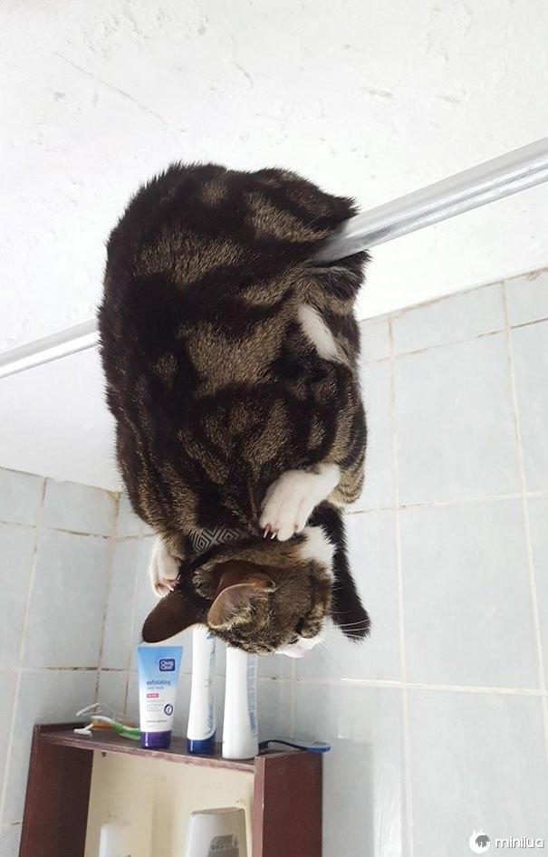 Isto é como meu amigo encontrou o gato no banheiro