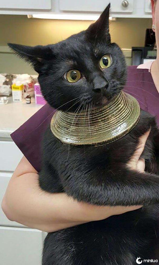 O gato do meu amigo tem sua cabeça presa em um vaso, arrebentou, quebrou o vaso e ficou com este