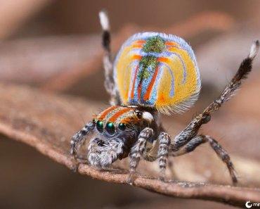 8 aranhas mais estranhas do mundo