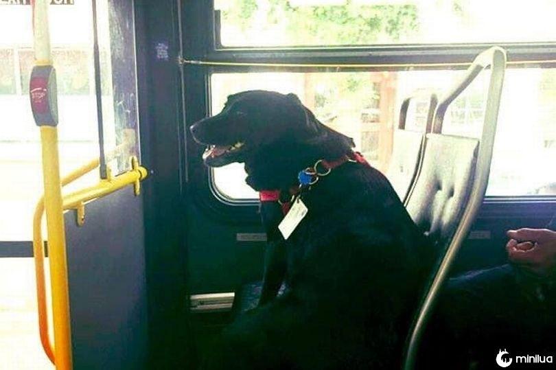 Cão pega ônibus de ida e volta todos os dias para brincar duas horas sozinha em um parque de cães | Minilua