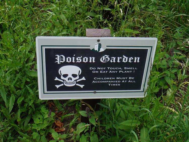 Os visitantes desmaiam no jardim envenenado do castelo de Alnwick | Minilua