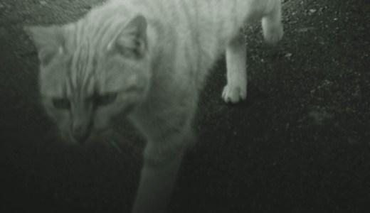 野良猫は自殺しない  佐々木典士