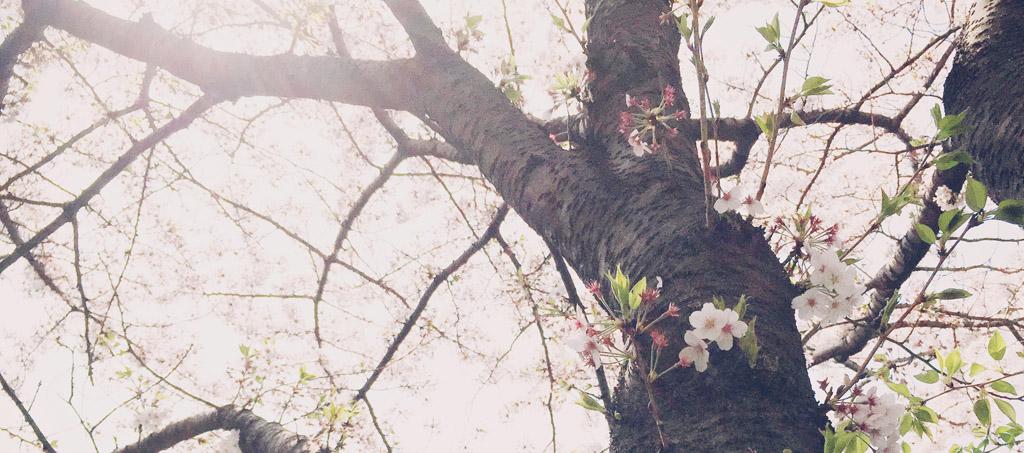 写真 2015-04-06 12 13 09