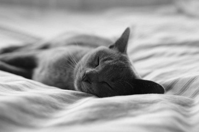 gatto che dorme sul cuscino