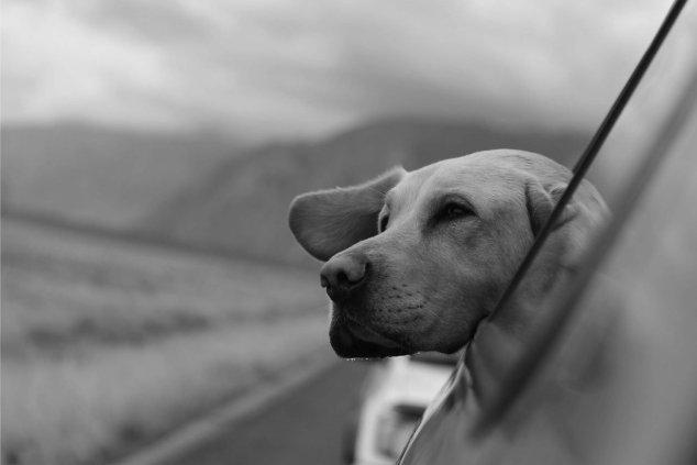 cane che respira